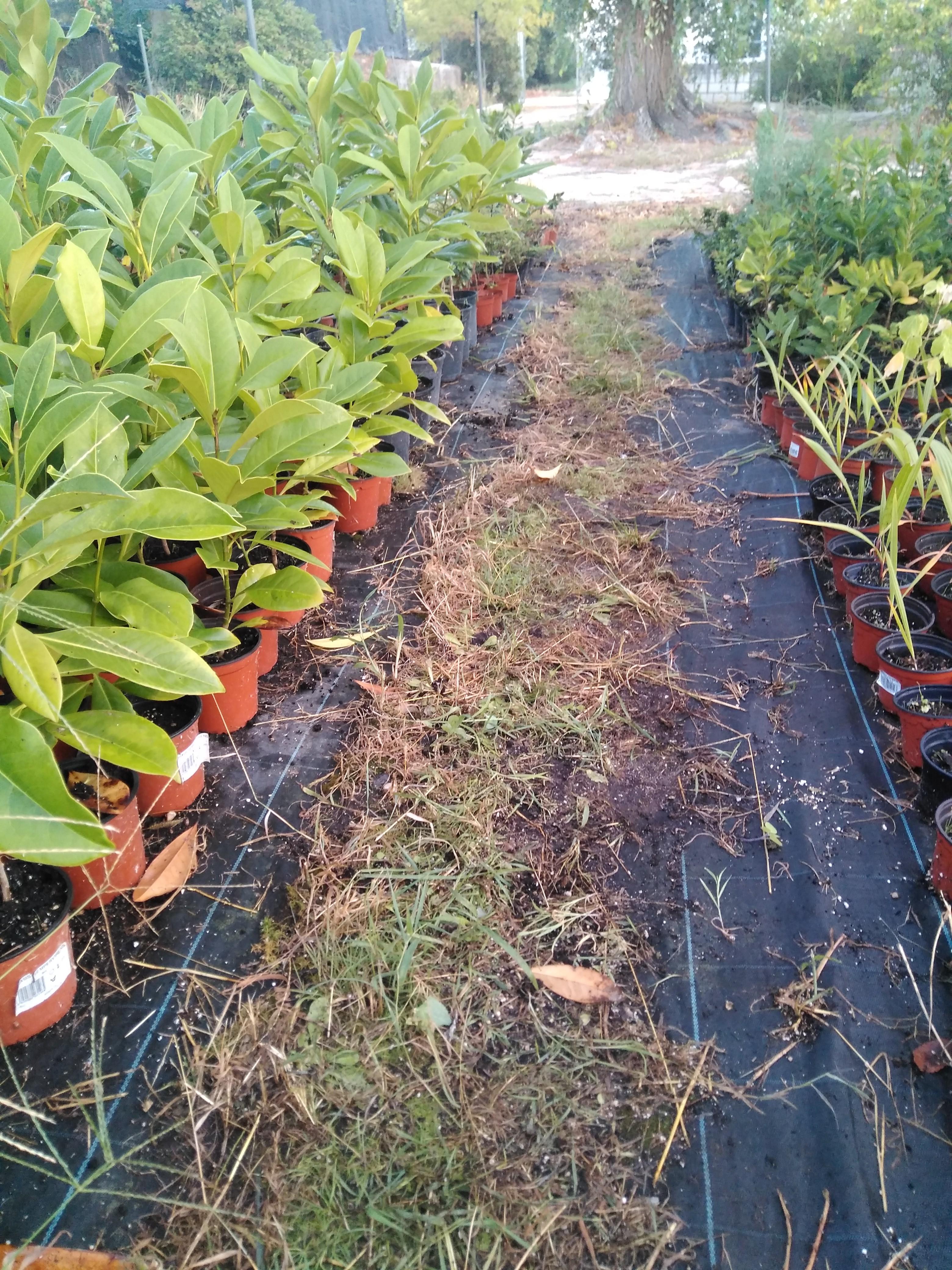 Producción de Planta Forestal en Vivero